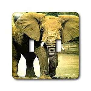 Wild animals   African Elephant   Light Switch Covers   double toggle