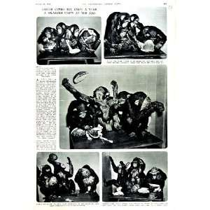: 1951 MONKEY CHIMPANZEE ZOO LONDON EASTER EGGS PARTY: Home & Kitchen
