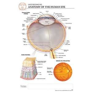Post It Anatomy Human Eye Chart