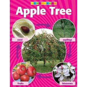 Apple Tree Life Cycle Photo Chart Teachers Friend Office Products