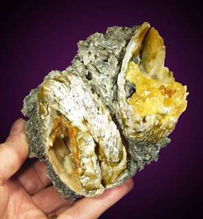 Amazing crystal filled fossil clams