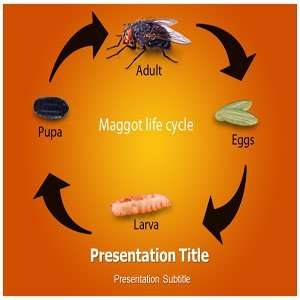 Maggot PowerPoint Templates   Background On Maggot