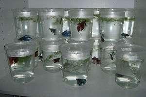 Live Tropical Fish   Male, Female, or Betta Fish Pair  BIN  BEST