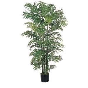 USA zeusd1 CALA 4270449 Areca Silk Palm Tree 6 Inch: Home & Kitchen