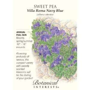 Sweet Pea   Villa Roma Navy Blue: Patio, Lawn & Garden