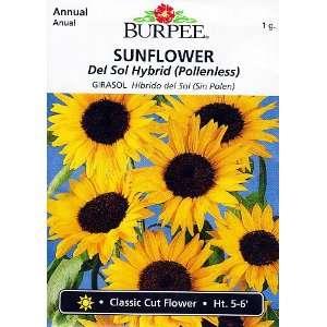 Burpee Del Sol Sunflower   35 Seeds Patio, Lawn & Garden
